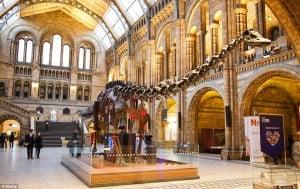 Dino museo