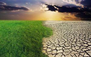 Pastos y desierto