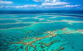Mar del Coral